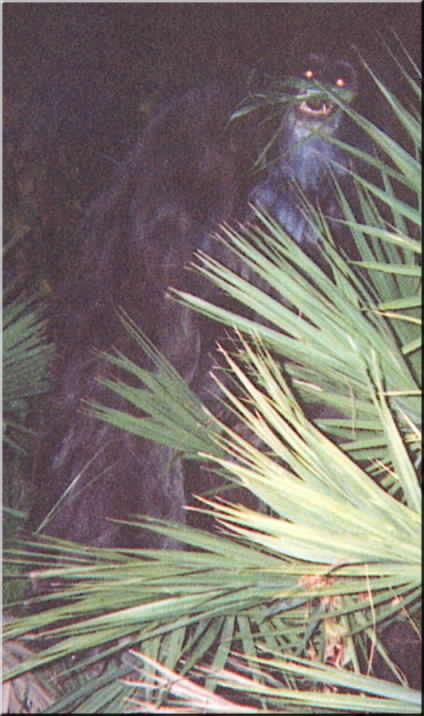 The Myakka ape